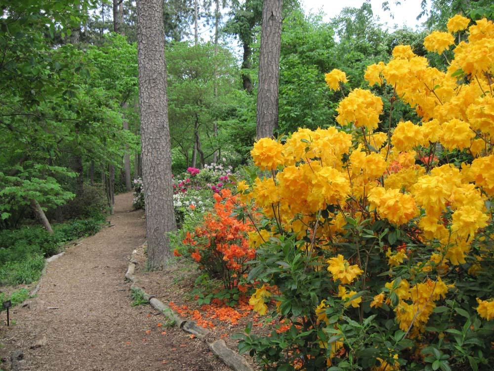 Laurel Tridge Trail
