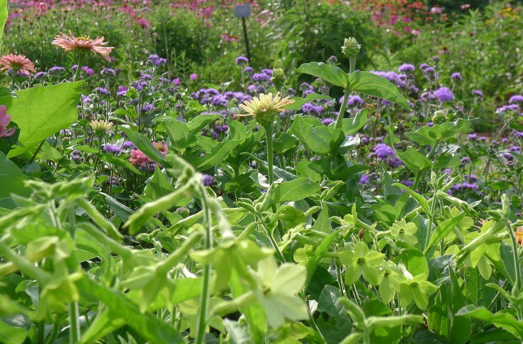 Flowers in the Gateway Garden at Matthaei