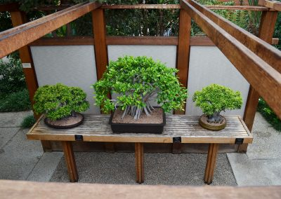 Bonsai in the conservatory at Matthaei