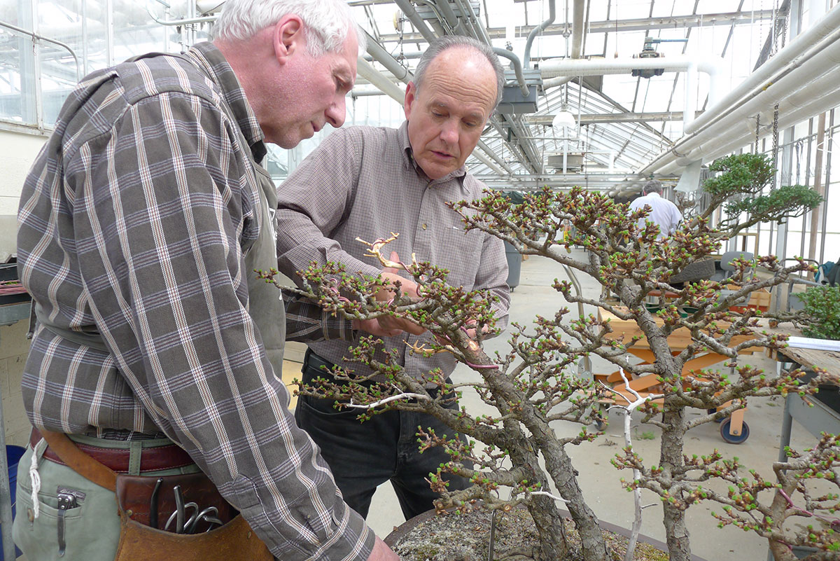 Caring for a bonsai