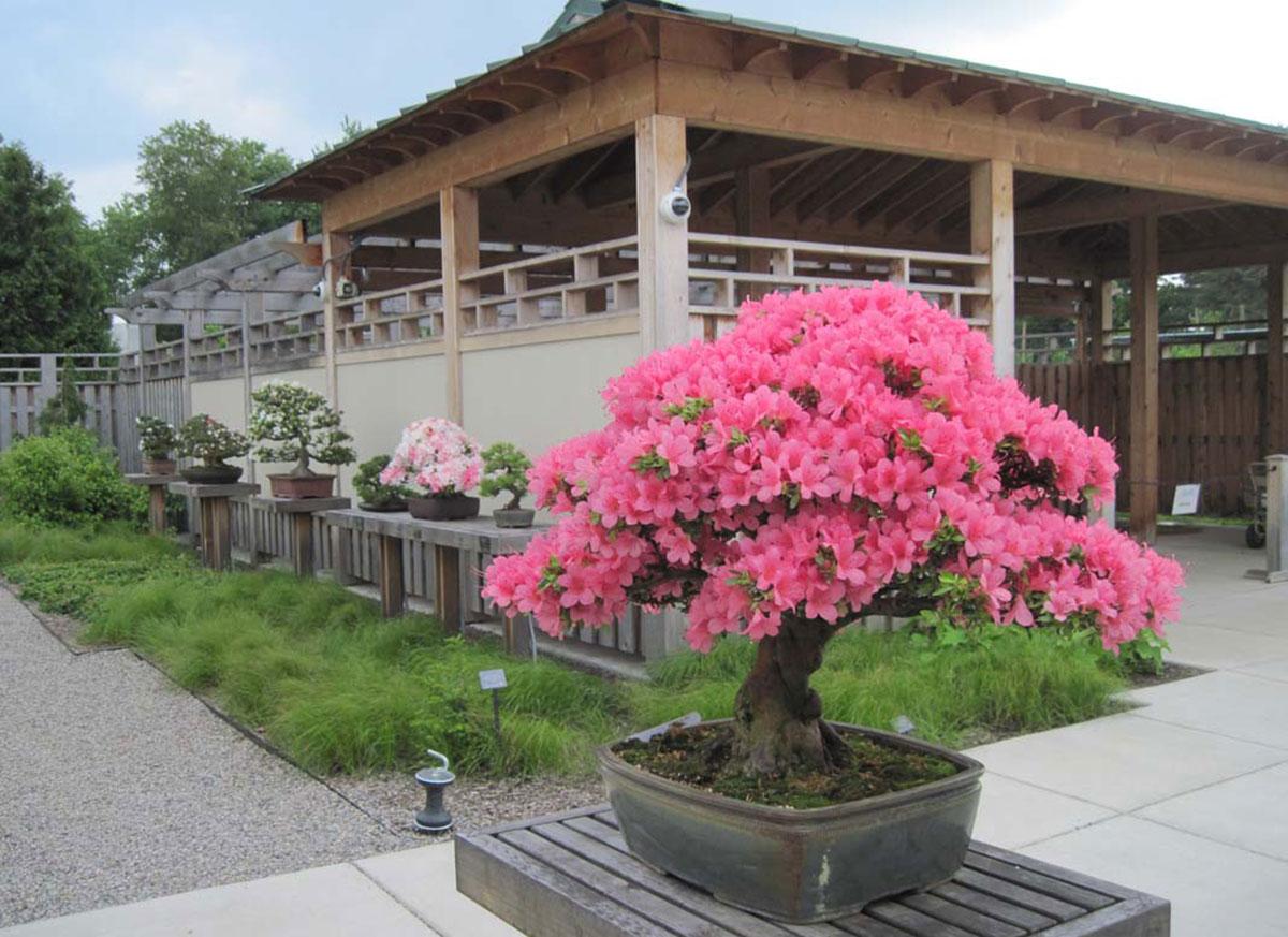 Our Garden Matthaei Botanical Gardens And Nichols Arboretum