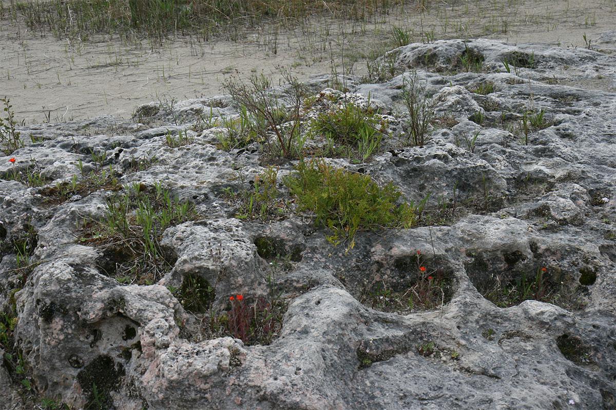Alvar-coastal plain
