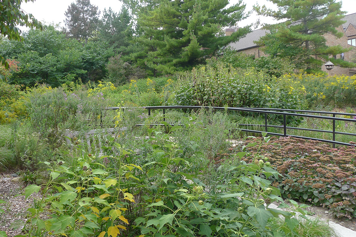 Gateway Garden at Nichols Arboretum