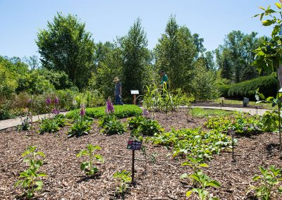 Medicinal-Garden-2