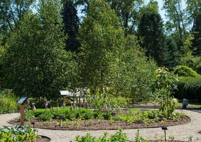 Medicinal Garden at Matthaei