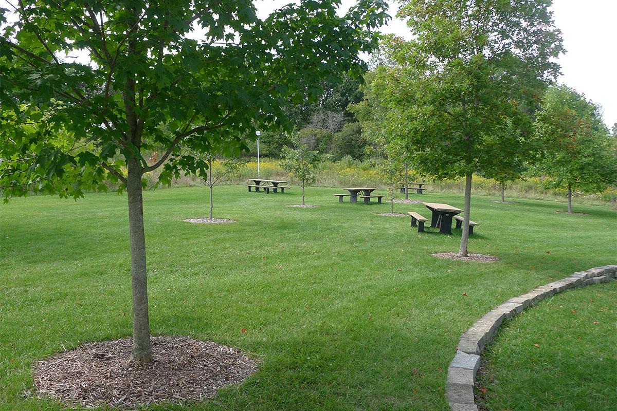 Norman Memorial Grove