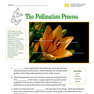 Download pollination pre-visit files
