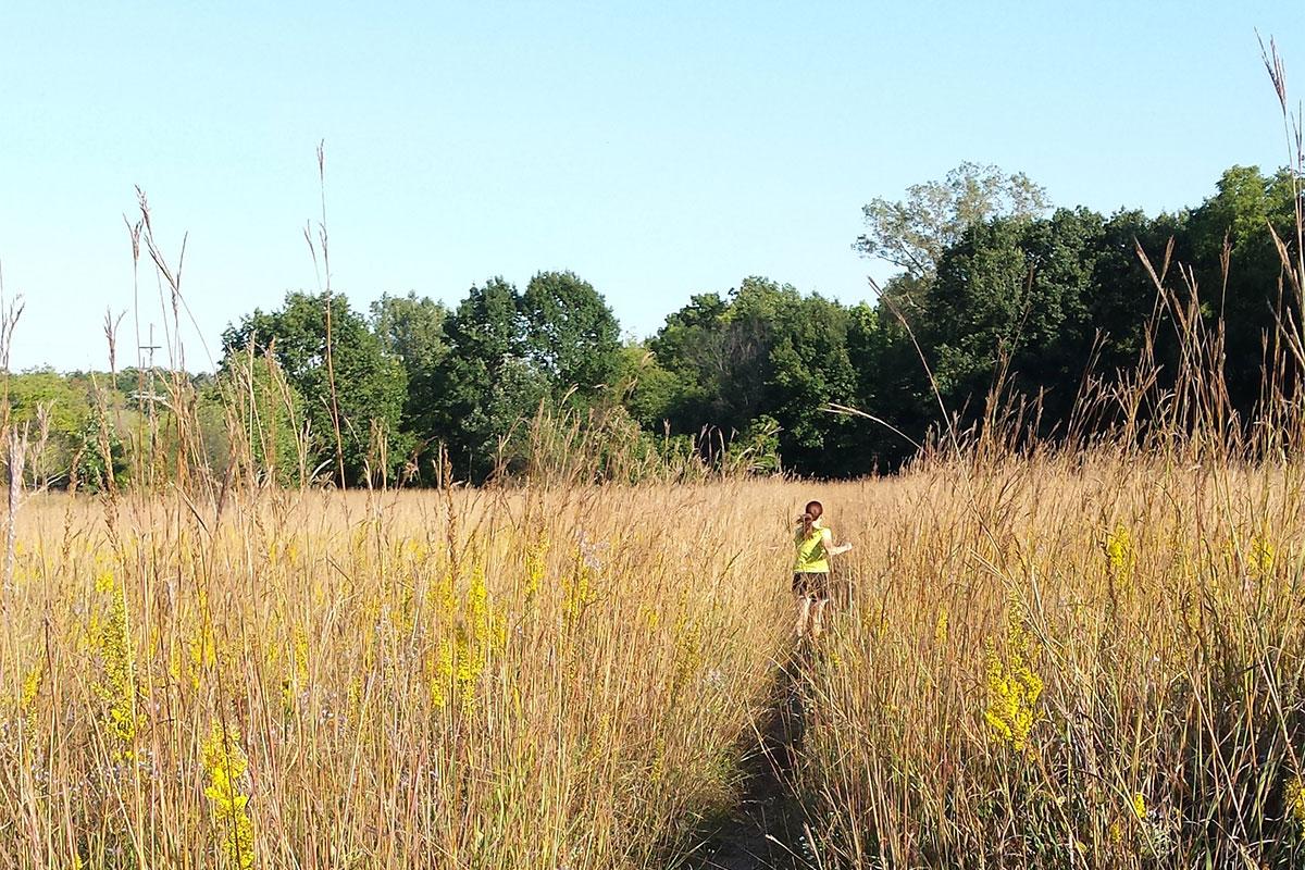 Alex Dow Field in Nichols Arboretum