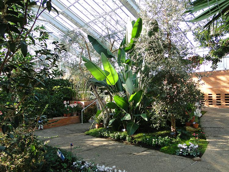 Conservatory Rentals Matthaei Botanical Gardens And Nichols Arboretum