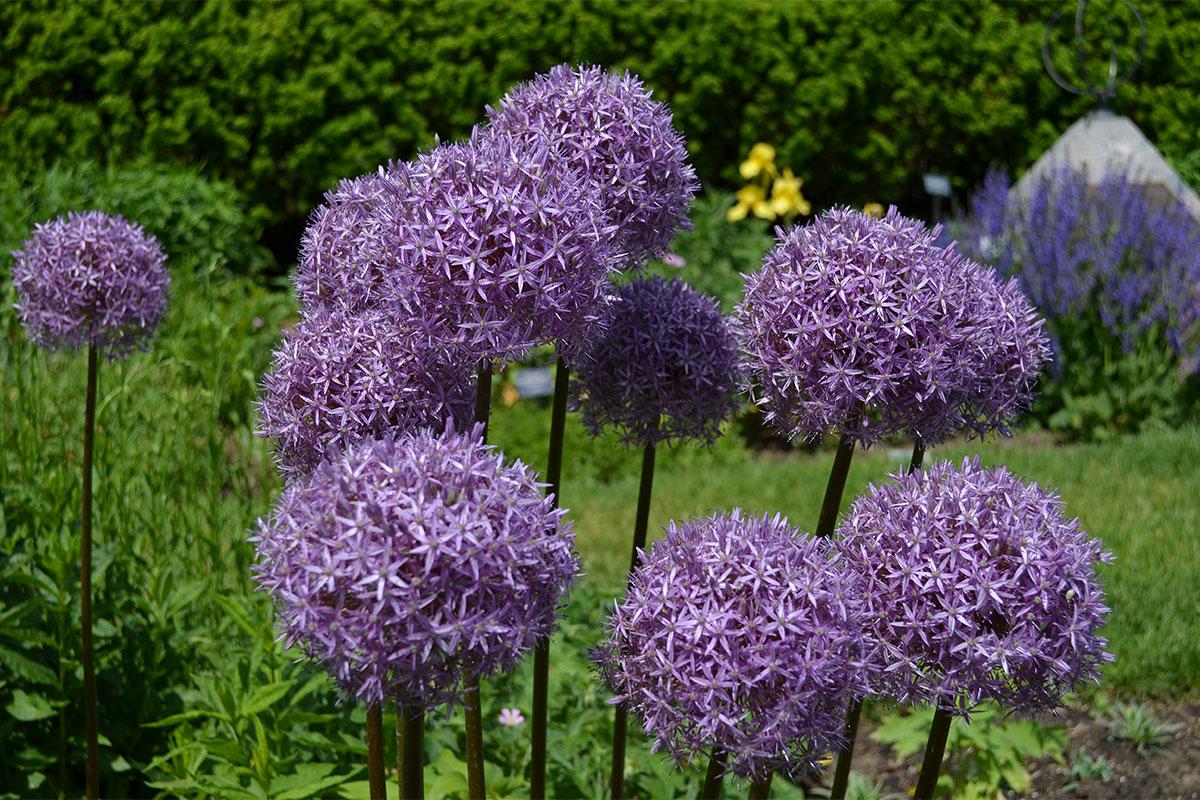 Whats In Bloom Spring Matthaei Botanical Gardens And Nichols
