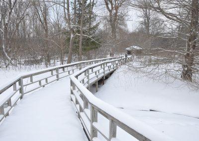 A boardwalk at Matthaei Botanical Gardens.