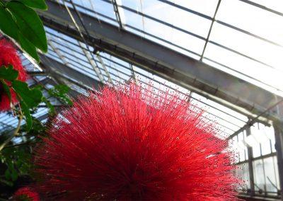 The conservatory at Matthaei Botanical Gardens