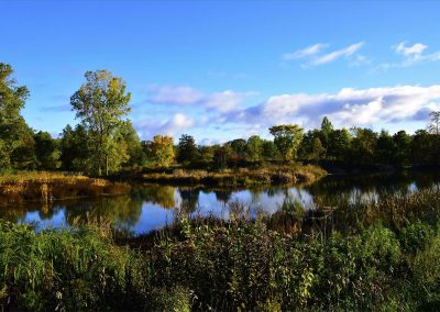 Looking across Willow Pond at Matthaei on a bright fall day. (Photo by Zohair Mohsen.)