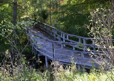 A footbridge at Matthaei