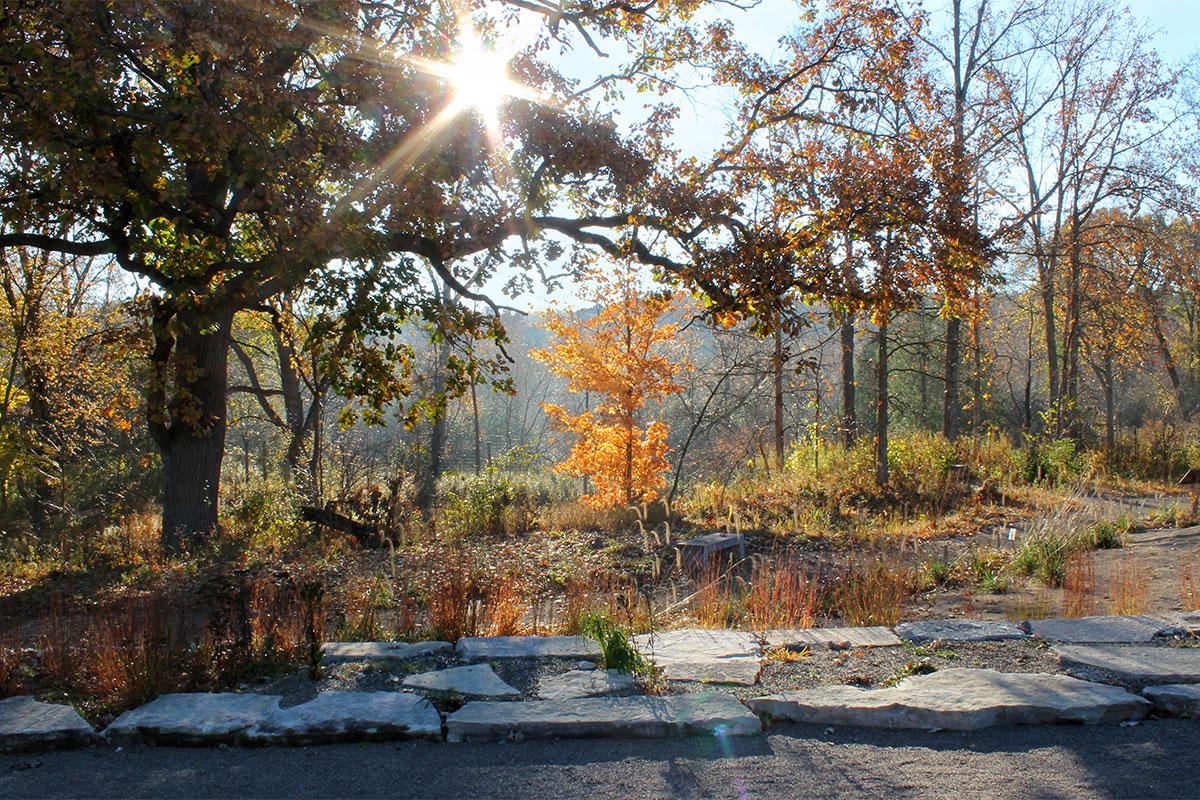 Oak Openings - Great Lakes Gardens - Matthaei Botanical Gardens and ...