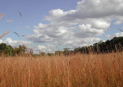 The Alex Dow Field in Nichols Arboretum glows with tall grasses that are often taller than humans.