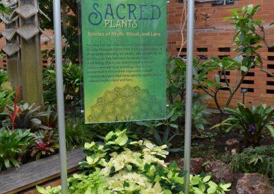 Sacred Plants photo by Michele Yanga