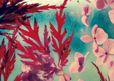 Jessica-Bohl-Botanical-1.24-aluminum-print