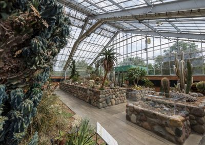 The arid house in the conservatory at Matthaei
