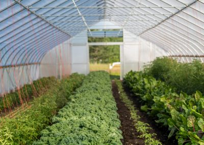 One of three hoop houses at the Campus Farm