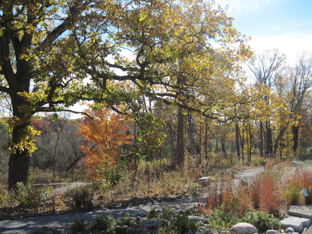 Photo Gallery - Matthaei Botanical Gardens and Nichols Arboretum