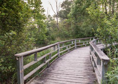 A boardwalk over the wetland at Matthaei