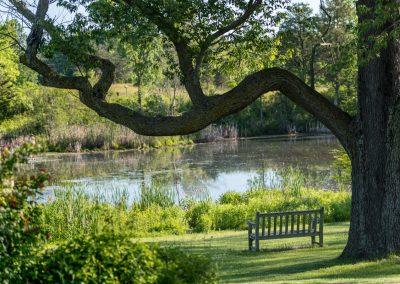 Willow Pond at Matthaei