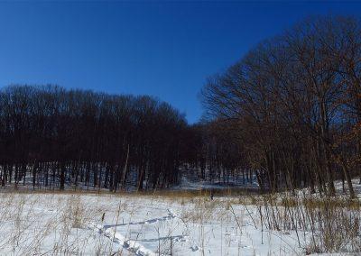 A winter scene in Dow Field prairie in Nichols Arboretum