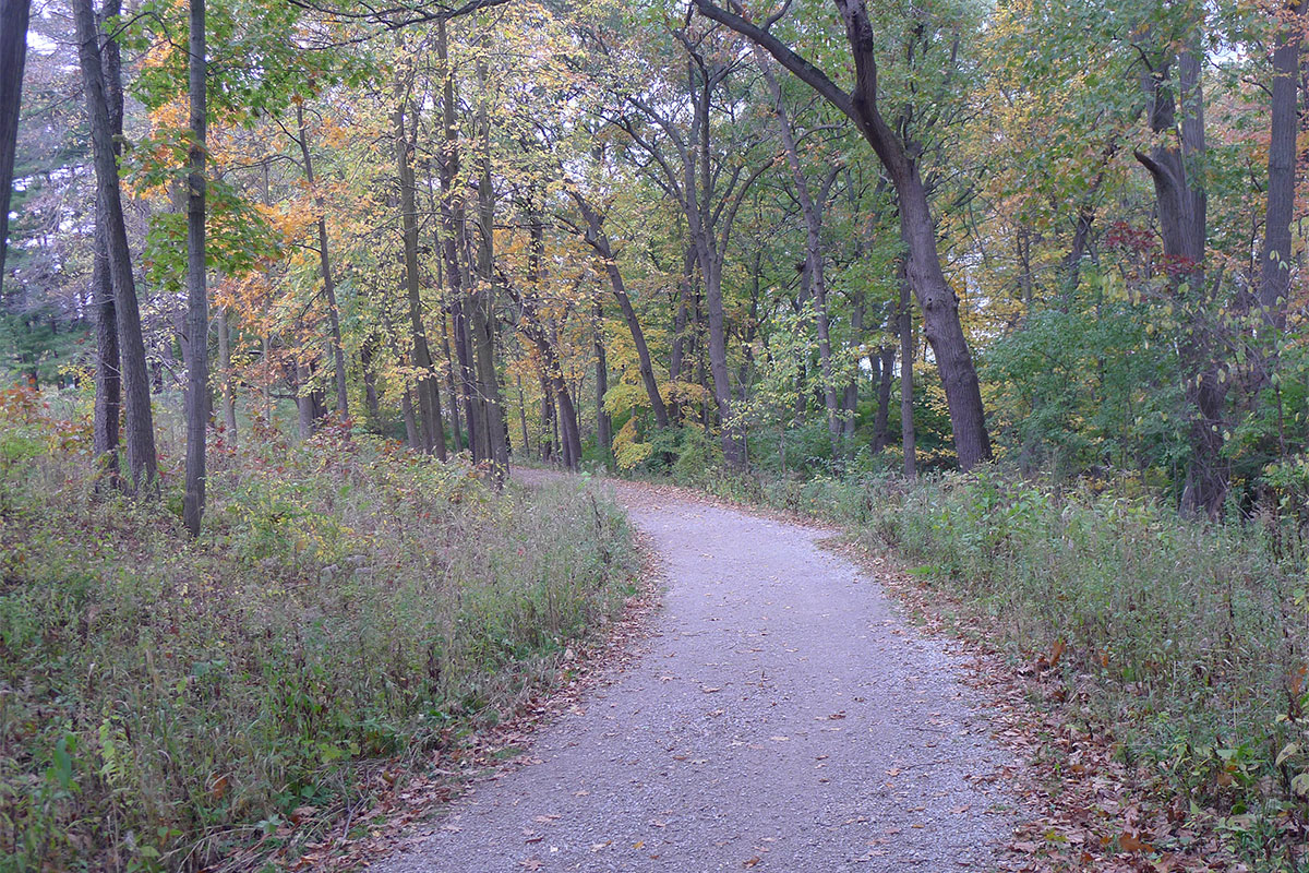 Oak openings area in Nichols Arboretum