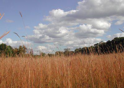 A fall scene in the prairie at Dow Field, Nichols Arboretum