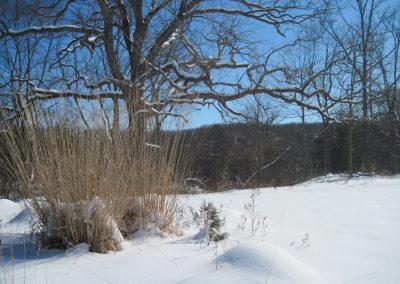 A view of Sam Graham Trail at Matthaei