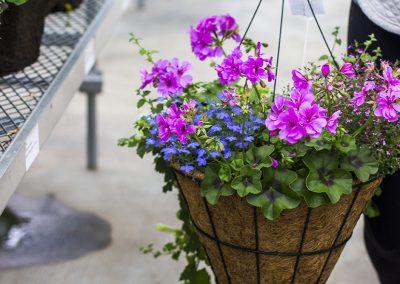 Hanging flower basket.