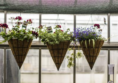 Three hanging flower baskets.
