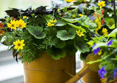 Flowers in watering can.