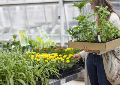 Woman holding basket of plants while browsing flowers for sale.