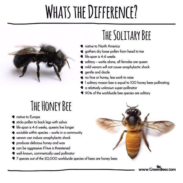 Different kinds of bees