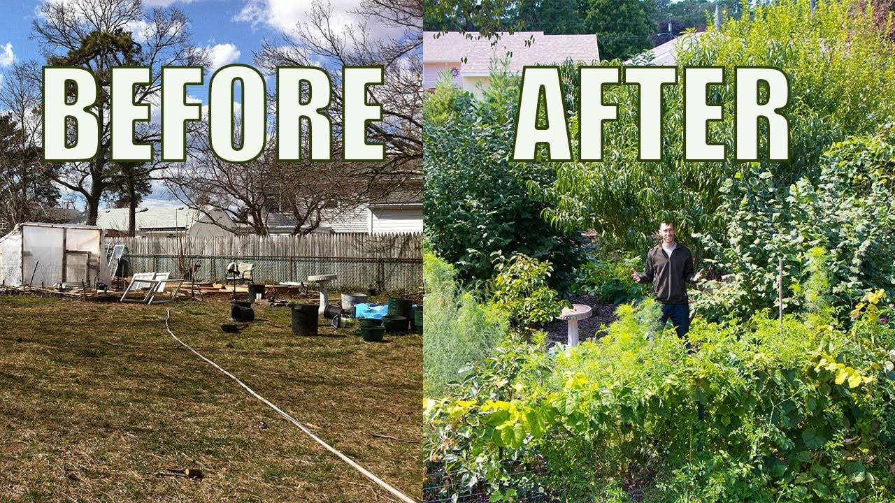 Intern post: Food Forests and the Power of Nature ...