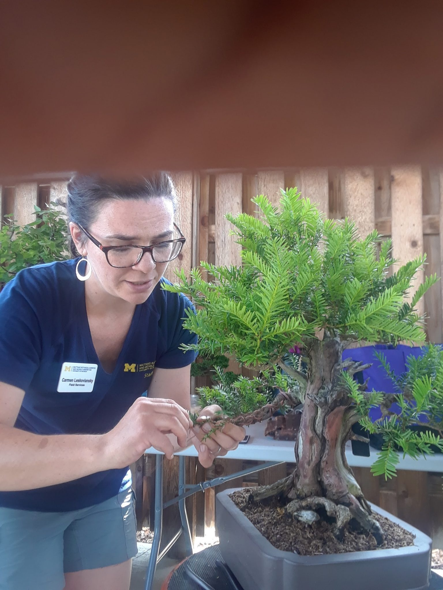 Fantastic Intern Post Bonsai Blends Art Science History And Culture Wiring Digital Resources Antuskbiperorg