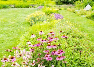 The perennial garden in bloom at Matthaei. Photo by Kim Scholl.