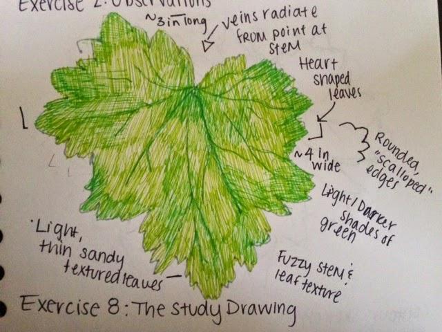 Leaf drawing-1