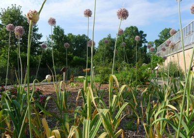 A view of the medicinal garden at Matthaei.