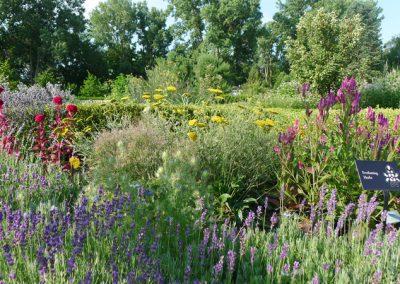 A view of the herb knot garden at Matthaei.