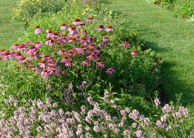 A view of the perennial garden at Matthaei