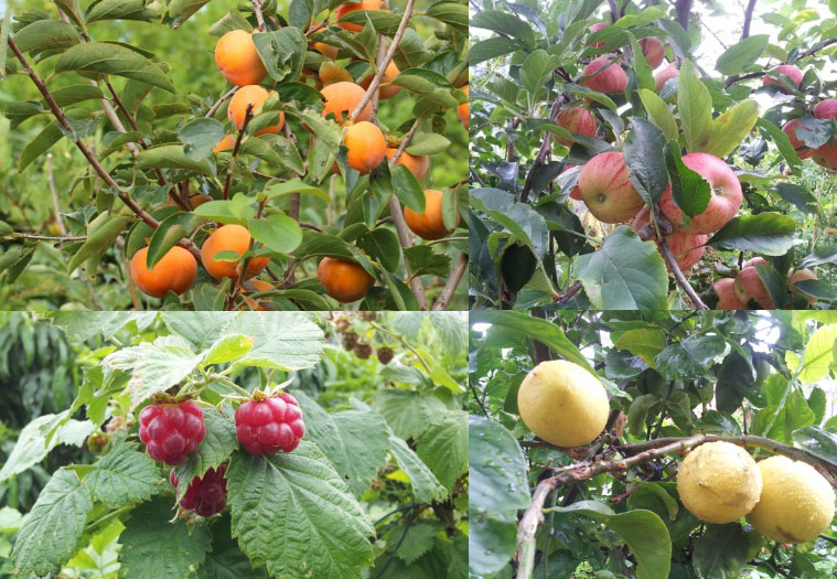 Fruit trees and plants in a food forest