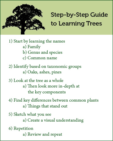 Step by step guide to tree ID