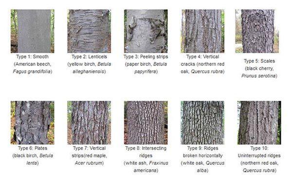 Tree bark samples