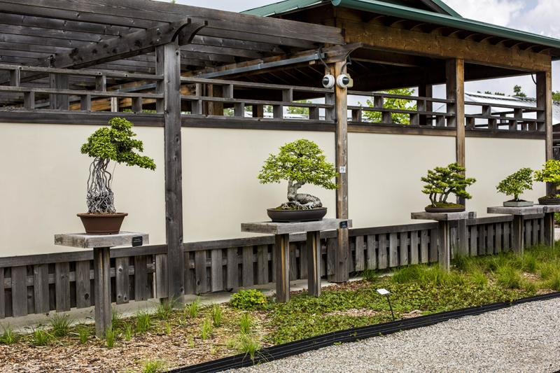 Photo Gallery The Bonsai Penjing Garden At Matthaei Matthaei Botanical Gardens And Nichols Arboretum