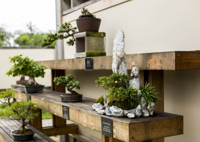 A view of the bonsai and penjing garden at Matthaei.