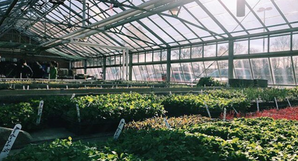 Growing veggies in the greenhouse for the Campus Farm.