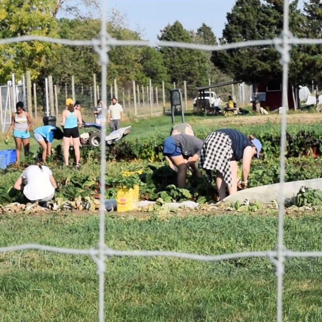 Students working in the Campus Farm